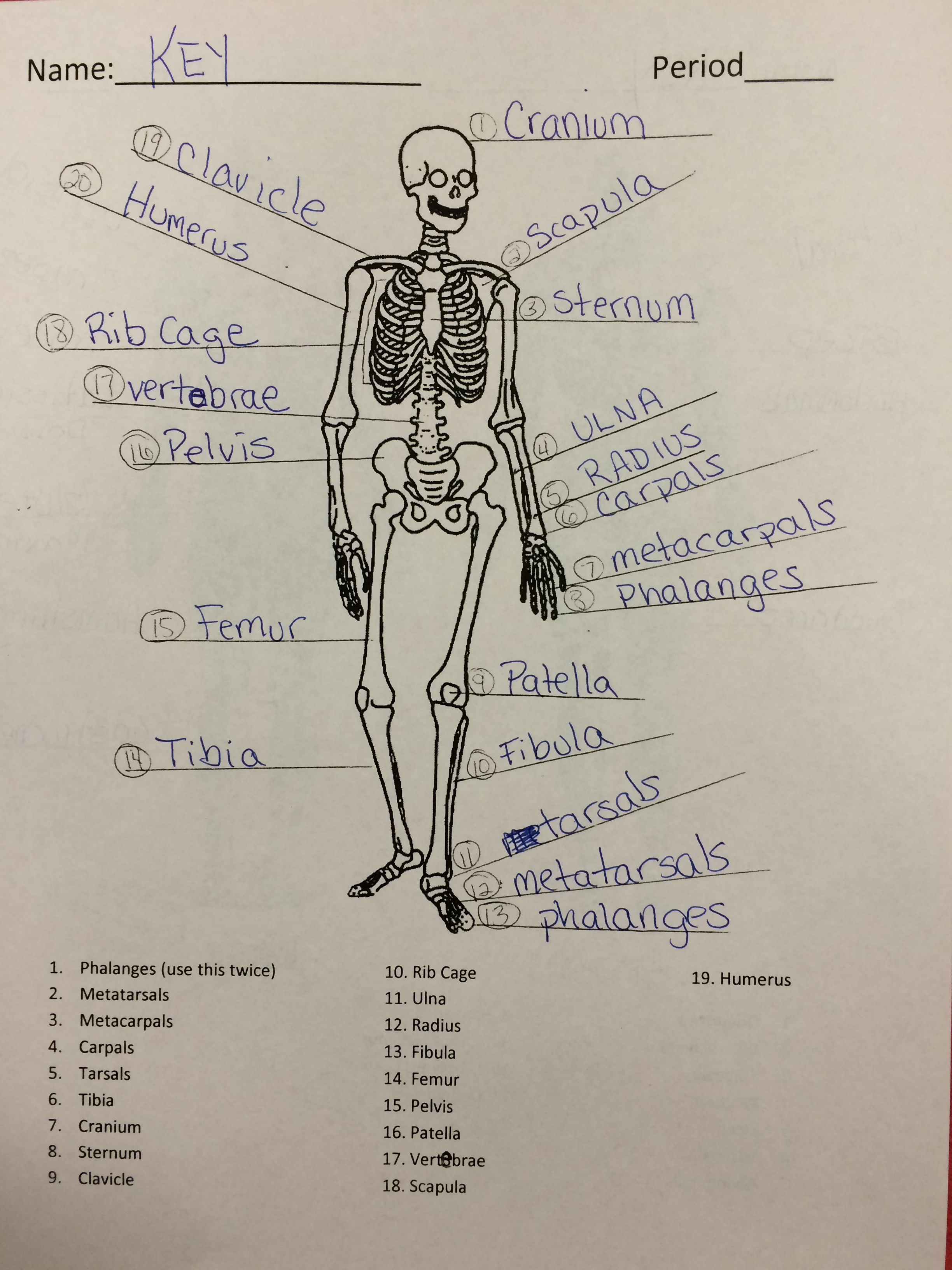 7th Grade Health Ms PryorIndian Valley Middle School – Skeletal System Worksheet Answers